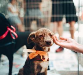 ¡No más venta de animales vivos en las plazas de mercado!