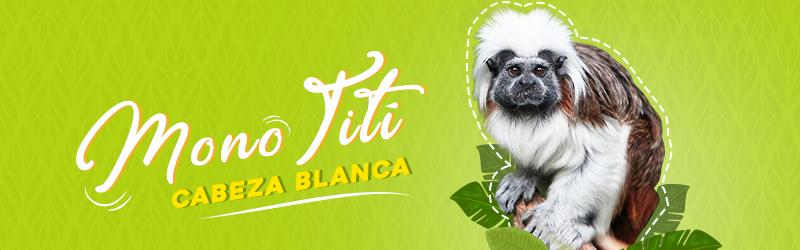 5 animales en grave peligro de extinción en Colombia | Mi Señal