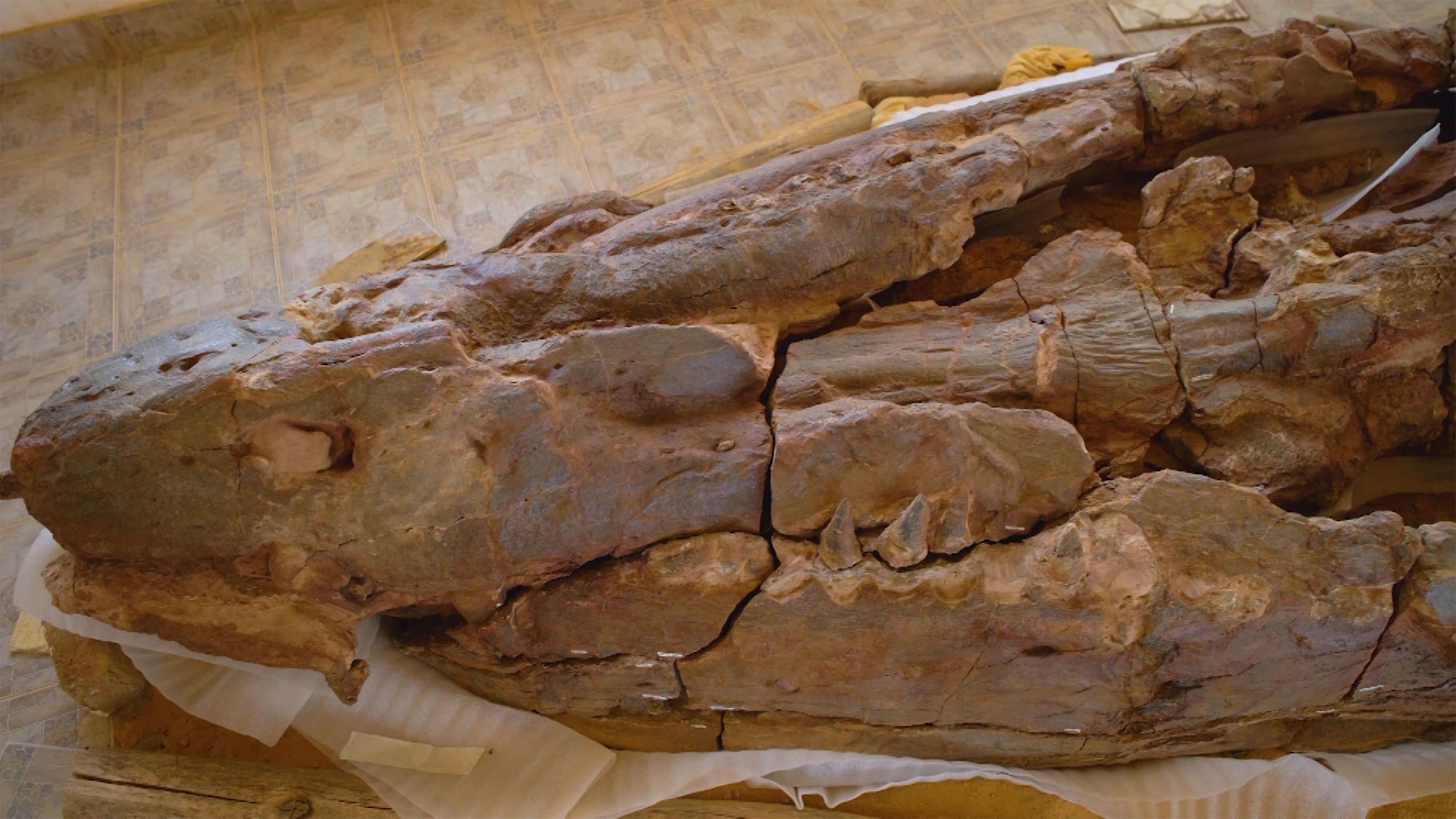 Dinosaurios - Fósiles en Villa de Leyva, Colombia - Dino Exploradores
