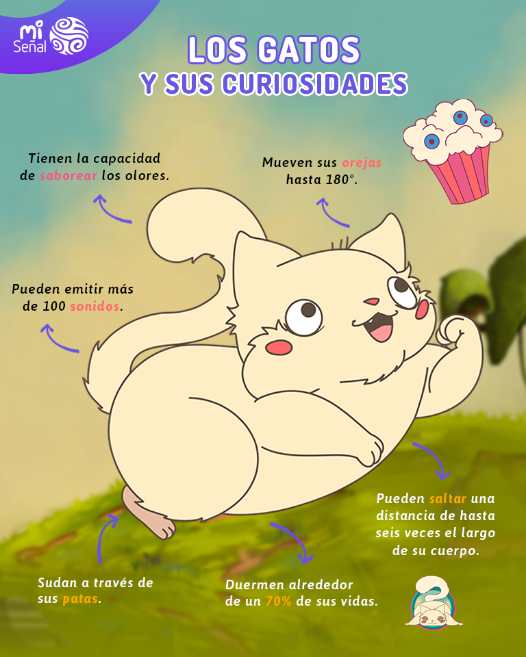 Curiosidades do gato