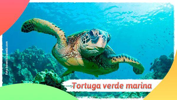 Tortuga verde marina: Animales en vía de extinción en Colombia