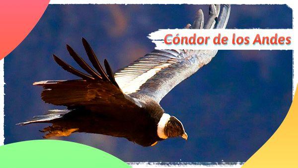 Cóndor de los Andes: Animales en vía de extinción en Colombia