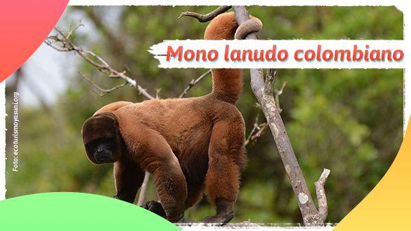 Mono lanudo: Animales en vía de extinción en Colombia