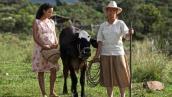 Dos mujeres y una vaca película gratis en RTVCPlay