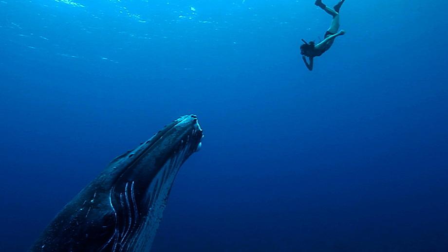"""Imagen del documental: """"Madre océano"""""""