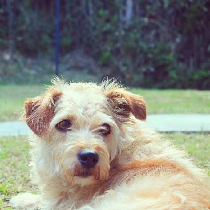 perro usuaria señal colombia