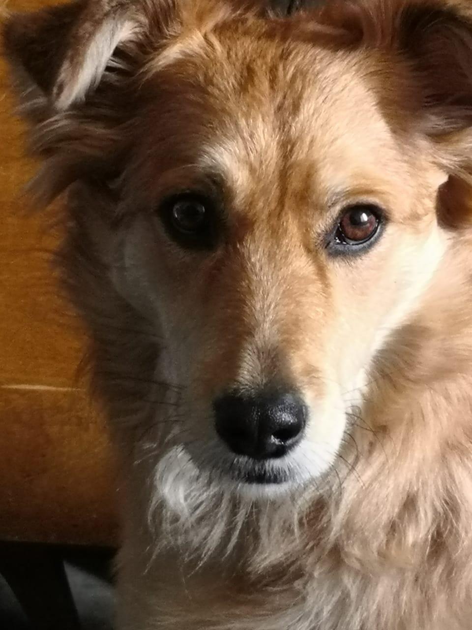Perro usuaria señal colombia 2