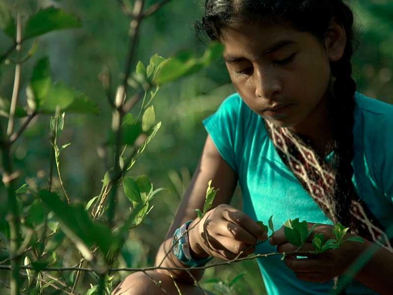 Una niña Nasa recoge yerbas medicinales en Camino de la Medicina ancestral