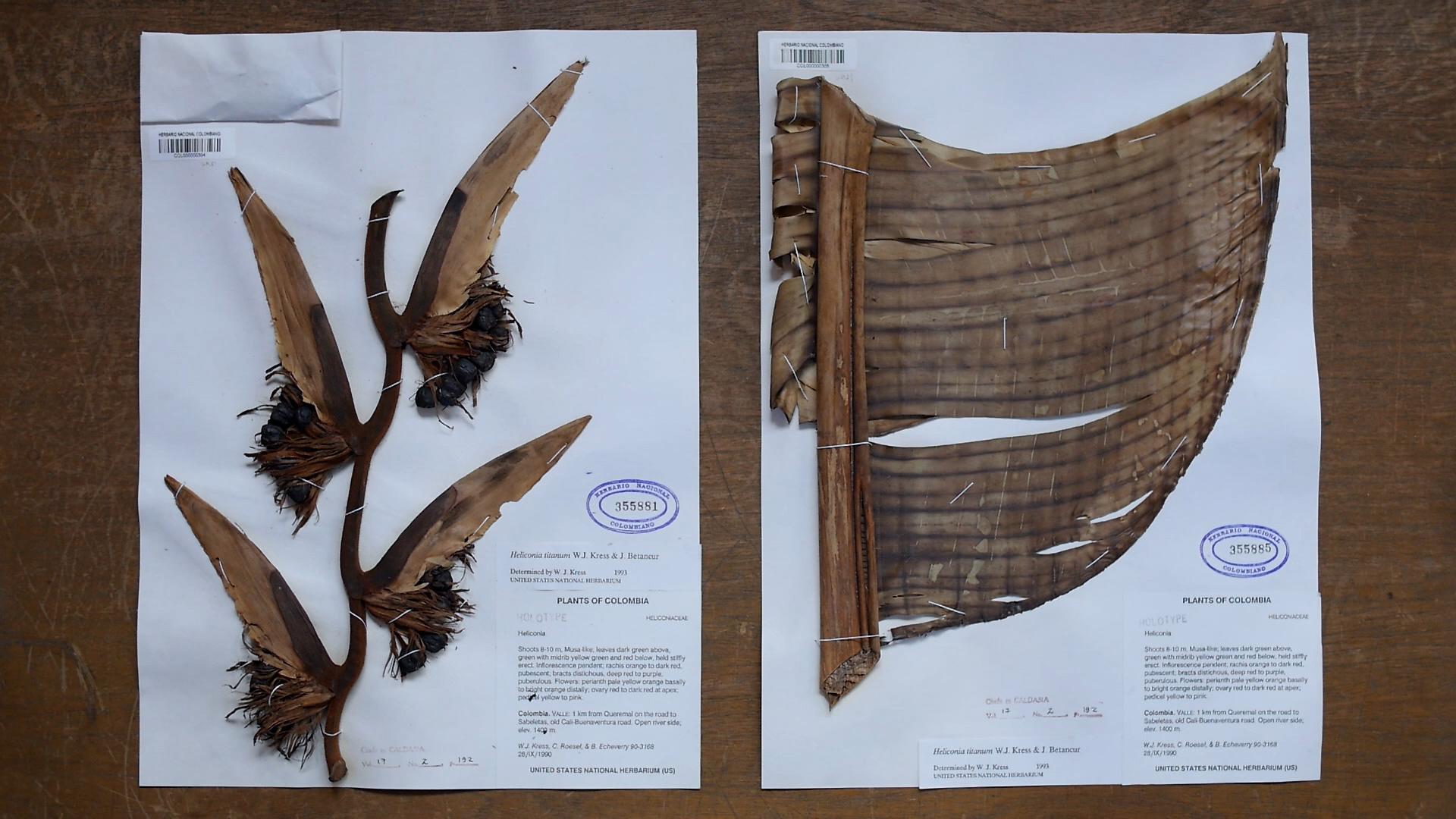 Imagen del registro documental que hace el botánico Julio Betancur.