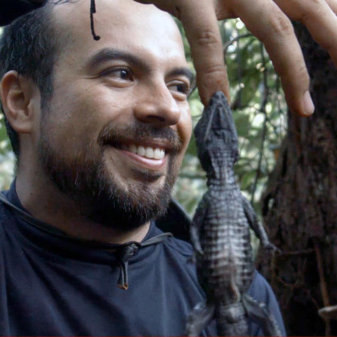 investigador sergio balaguera sosteniendo un pequeño caimán aferrado a su dedo