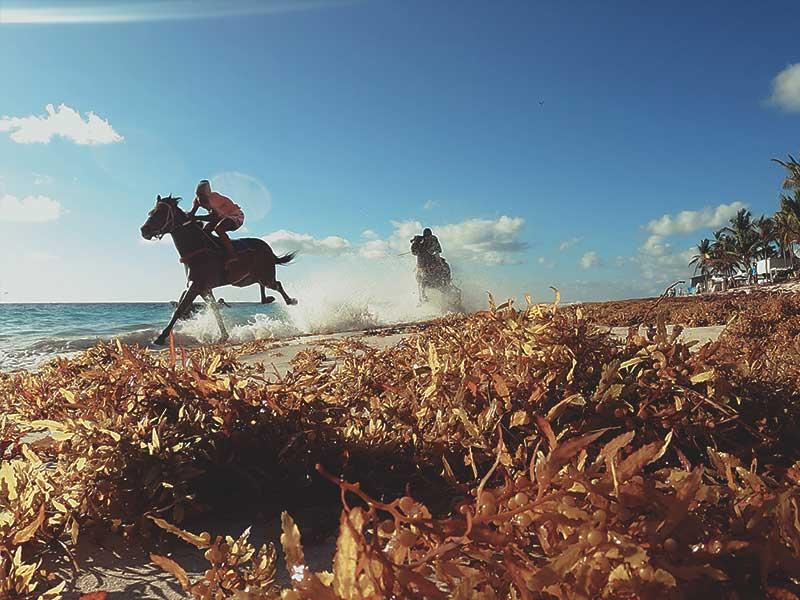 Dos caballos se enfrentan en una carrera en el documental footprints