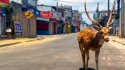 Animal salvaje en las calles durante la cuarentena