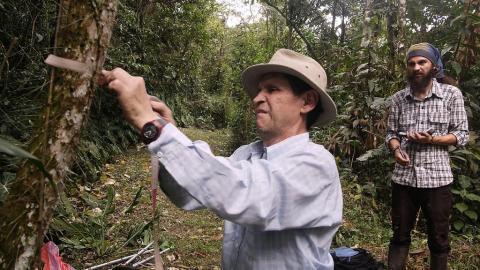 Imagen de la película 'Homo botanicus'.