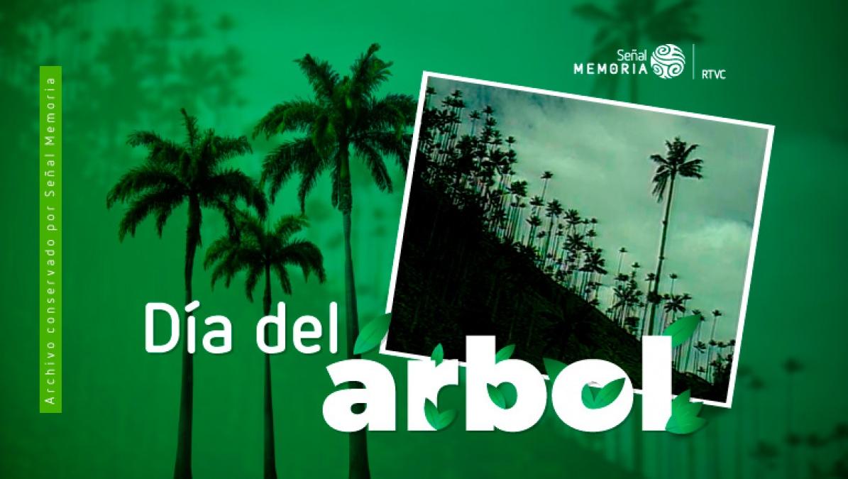 La palma de cera del Quindío: El árbol Nacional de Colombia