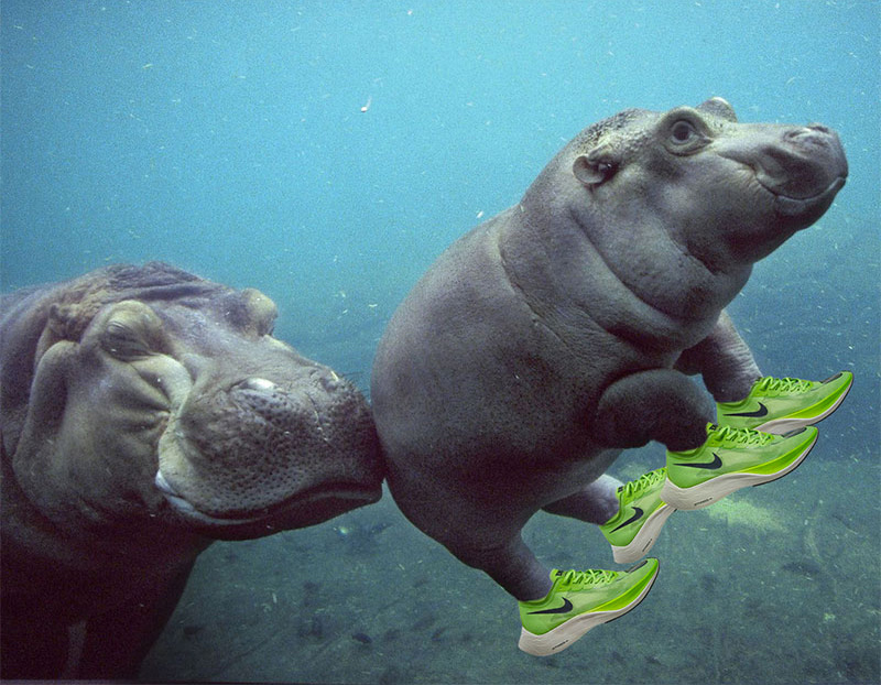 baby hippo in running shoes