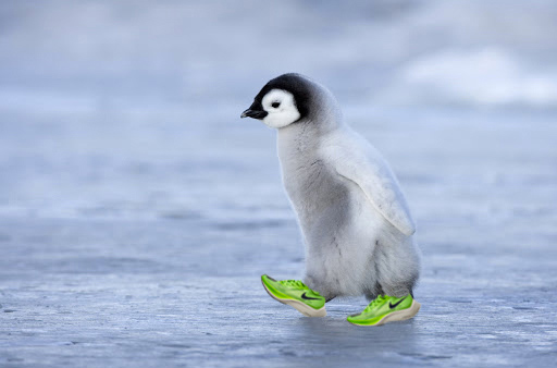 baby penguin in running shoes