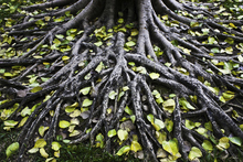 Becoming the Roots @ ElderMoon School - FREE Herbal Medicine Making Course