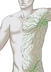 Intro To The Ossipinsky Method Of Self-Lymphatic Drainage