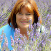 Caryl lavendar field photo  2
