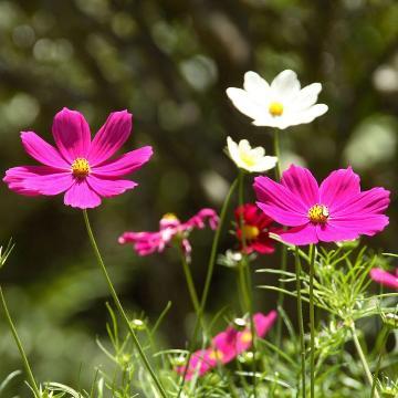 Psicoanálisis Significado de Soñar con Flores, Sueño Flores