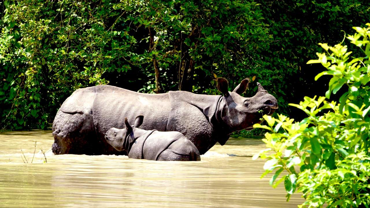 RESCATAN EN LA INDIA A 170 ANIMALES TRAS LAS INUNDACIONES
