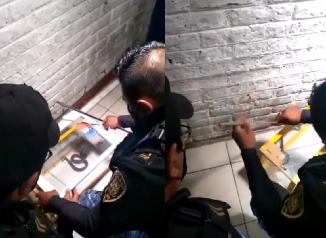 VIDEO: VÍBORA DE CASCABEL MUERDE A PACIENTE EN HOSPITAL DE TLÁHUAC