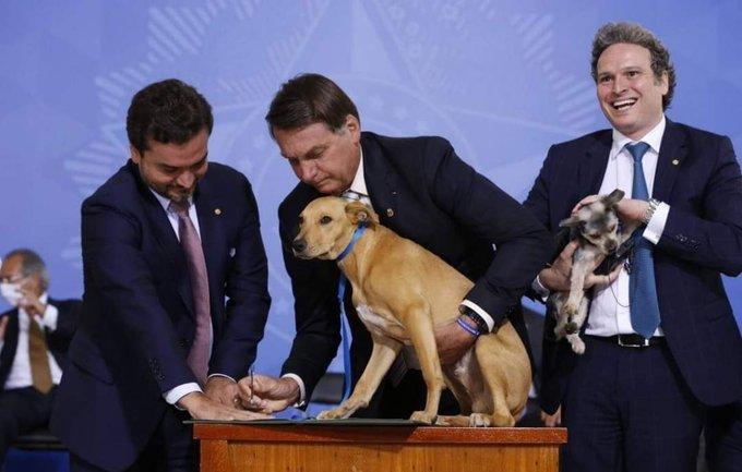 PROMULGAN LEY CONTRA EL MALTRATO ANIMAL EN BRASIL