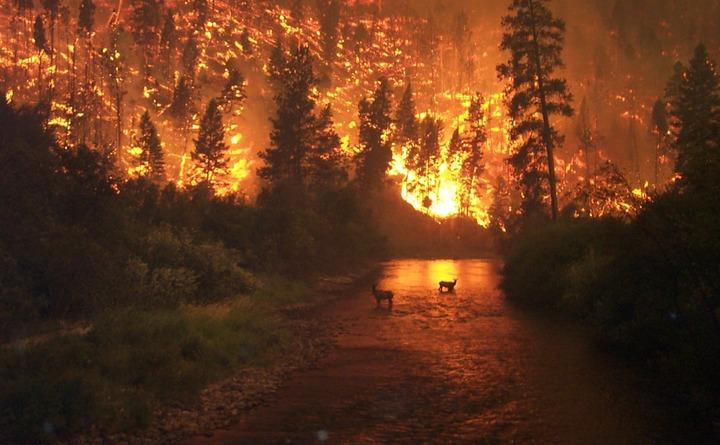 HAY UN DRAMÁTICO AUMENTO DE DESASTRES NATURALES: ONU