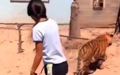 NIÑA SE PASEA CON UN TIGRE DE BENGALA EN SINALOA