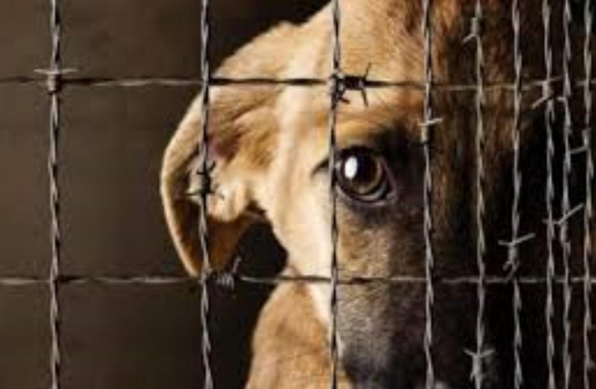 QUIEN MALTRATE A ANIMALES EN PUEBLA PUEDE IR A PRISIÓN