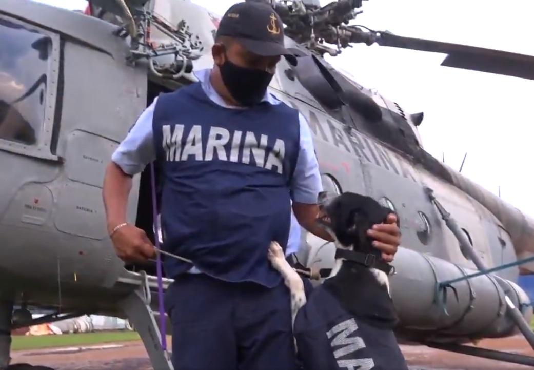 VIDEO: MARINA RESCATA A SEGUNDO PERRITO DE LAS INUNDACIONES EN TABASCO