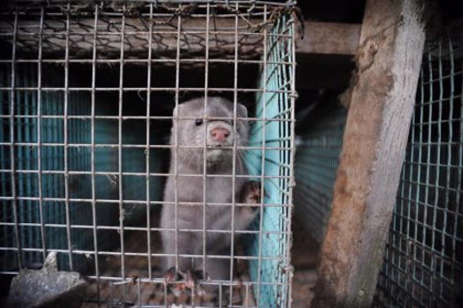 PROPAGACIÓN DE COVID-19 EN ANIMALES SILVESTRES PODRÍA SER UNA AMENAZA A FUTURO