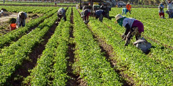 trabajadores agrícolas
