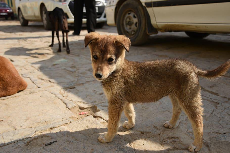 DÍA INTERNACIONAL DEL ANIMAL SIN HOGAR ¿CÓMO ERRADICAR ESTE PROBLEMA?
