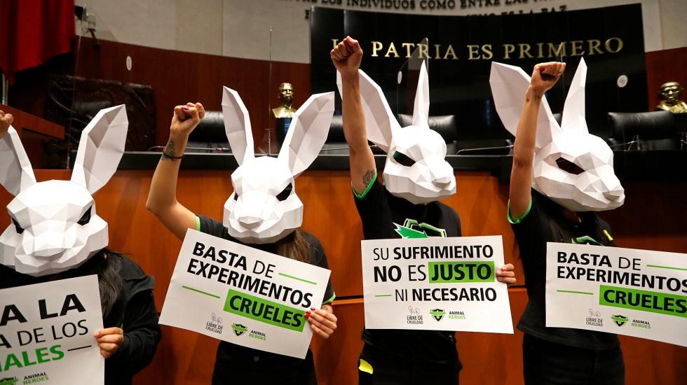 PROHÍBEN USO DE ANIMALES PARA PRUEBAS DE COSMÉTICOS EN MÉXICO