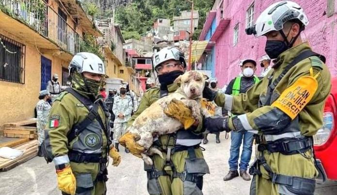 MÁS DE 40 MASCOTAS HAN SIDO RESCATADAS EN ZONA DEL CERRO DEL CHIQUIHUITE