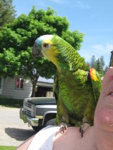 Sherry aka Parrot Chick