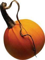 PumpkinBeads