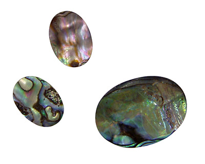 Abalone Oval Cabochon 20-22x30mm