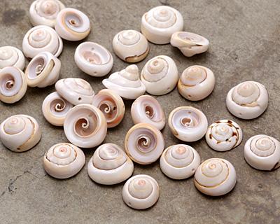 Luhuanus Everlasting Shell Spire Slice Bead 22-28mm