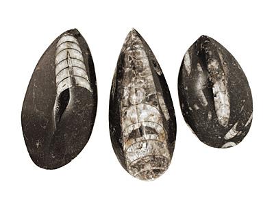 Orthoceras Teardrop Cabochon 29-35x55-76mm