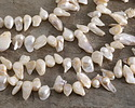 Pearly White Natural Biwa Top-Drilled Freshwater Pearl 5-9x13-21mm