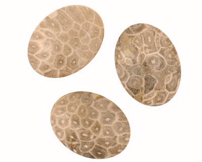 Gray Fossil Coral Oval Cabochon 30x40mm
