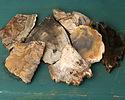 Petrified Wood Freeform Slice Drop w/ Natural Edge 50-75x64-105mm
