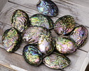 Abalone Freeform Puff Oval Focal 45-63x35-49mm