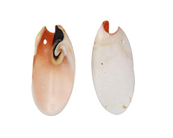 Luhuanus Everlasting Shell Petal Drop Pendant 11-19x26-45mm