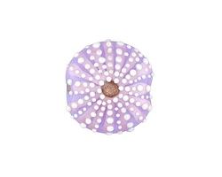 Grace Lampwork Lavender Sea Urchin Lentil 24-25mm