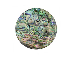 Abalone Large Coin Focal 50mm