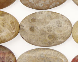 Fossil Coral Flat Oval 30x20mm