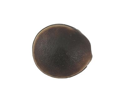African Mucuna Sea-Bean Focal Bead 25-30x24-26mm